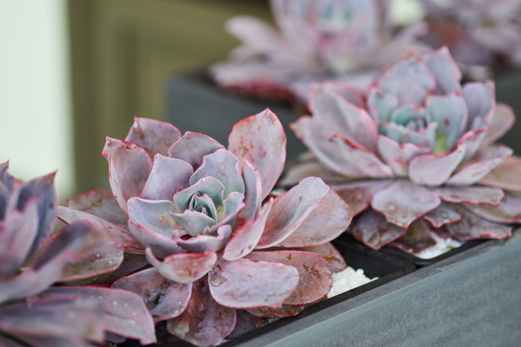 Succulents outline the outdoor patio
